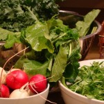 Salad Turnips, Radishes, Turnip Greens, Kale, Pea Shoots